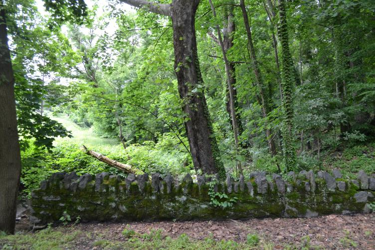 An old bridge across Vine Creek hides in a shady area next to the trail