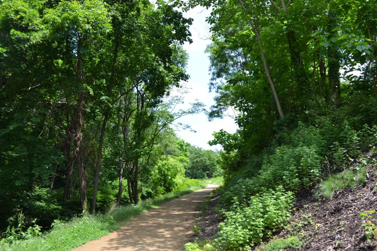 At times the nature trail passes beneath densely packed trees rather than the catenaries