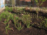 Green stormwater management at Nebinger School, Photo courtesy of Philadelphia Water Department