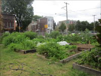Emerald Street Urban Farm has taken root on five vacant lots in East Kensington.