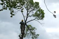 Learn how to spot a dangerous tree, and when it's time to call in the pros at a PHS workshop on Tuesday.