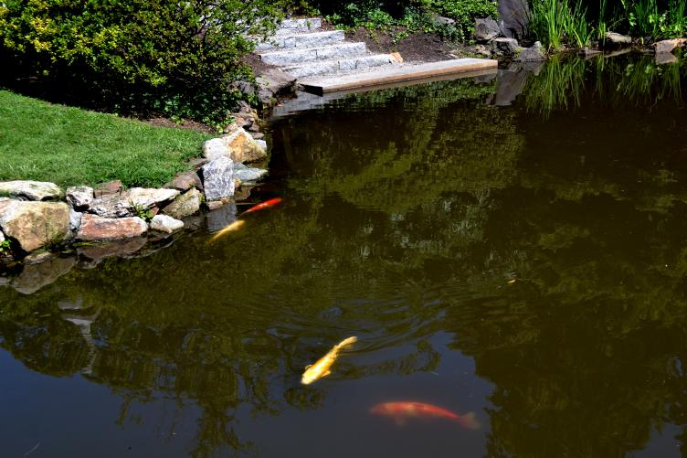 The granite steps and restored boat launch provide direct access to the koi pond