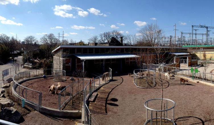 The new children's zoo design embraces the zoo's animal freedom strategy, Photo Courtesy of SMP Architects