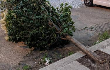A tree down in East Kensington.