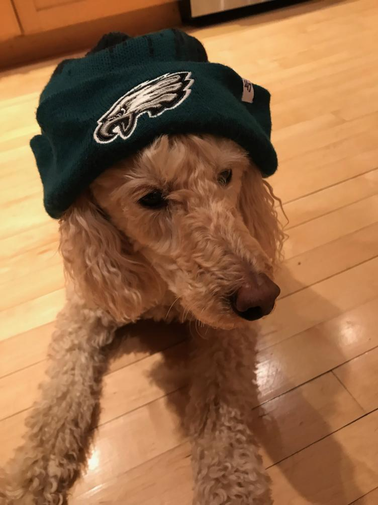 Tucker is a fandog, he wants everyone to know. Credit: Queenie's Pets.
