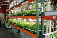 Vertical farming in South Philadelphia. | courtesy of Metropolis Farm